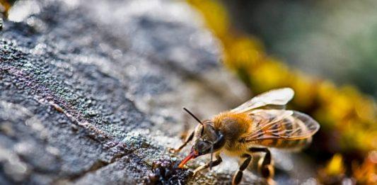 api in città