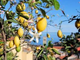 territorio in Liguria