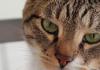 la-parola-ai-gatti