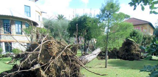 A Genova alberi secolari divelti come fuscelli
