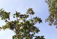 gestione delle aree verdi