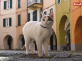 Varese Ligure e una guida felina